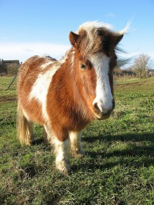 Google: A One-Click Pony?