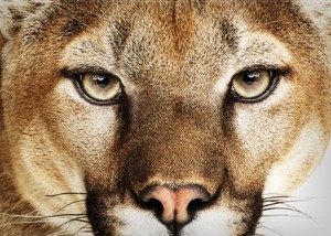 Mountain Lion Blog Stirs Debate