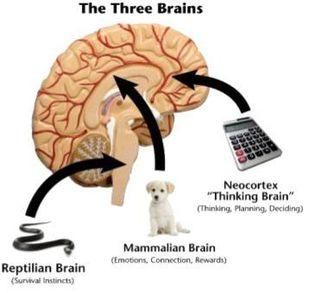 Appealing to Man & Beast: Neuromarketing Strategies
