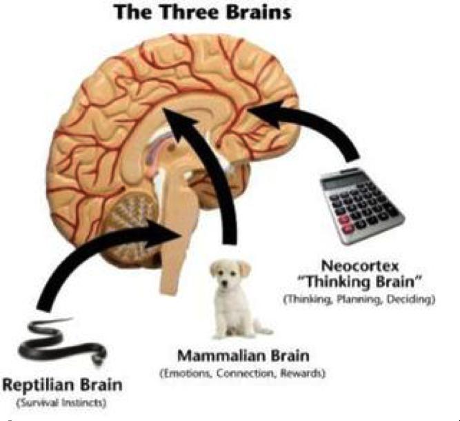 three_brains